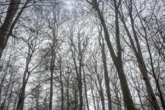 Nebel_Wald-2