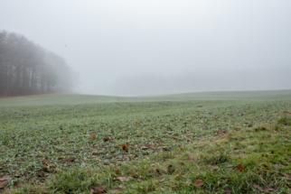 Nebel_Wald-4