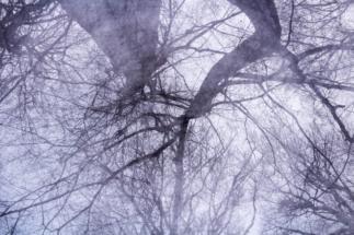 Nebel_Wald-5