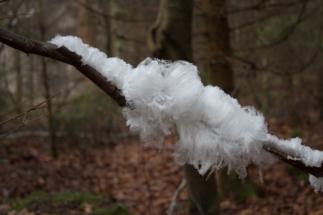Nebel_Wald-8